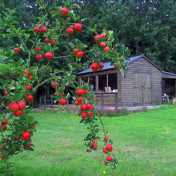 Orchard in fruit